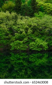 Scenery of the green pond in spring, green water surface reflection