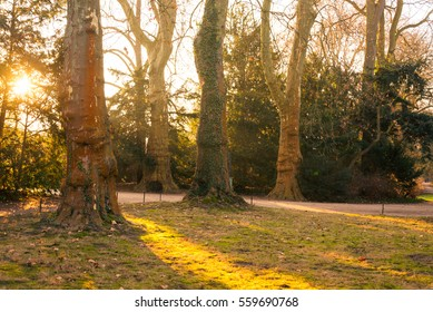 Scenery and landscape of pathway inside a forest during sunset time