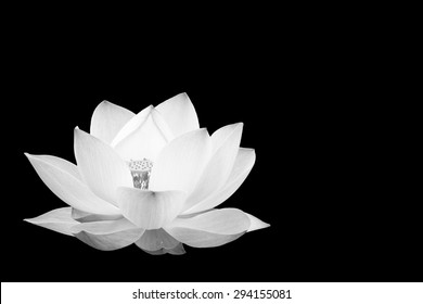 Scenery of lotus flower in the farm in black and white tone.