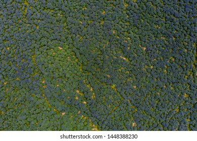 Scenery lupins background. Aerial top down view