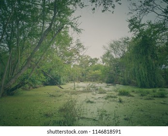 scenery of natural green forest with warm fade color effect, low contrast background backdrop