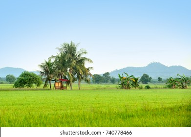 Sawah Padi Images Stock Photos Vectors Shutterstock