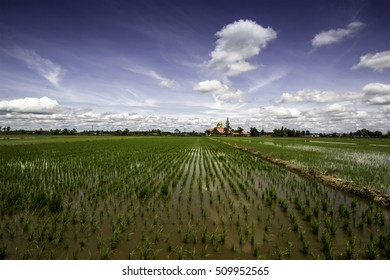 Scenery in the paddy fields when a sunny day