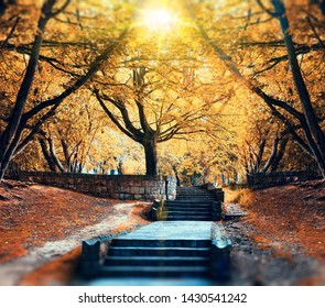 Scenery park and nature.Beautiful and mystic park with trees and path