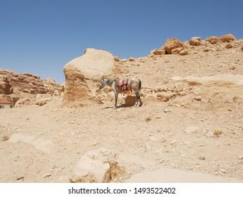 Scenery of Petra ruins in Jordan