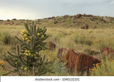 Scenery of the Petrified Forest