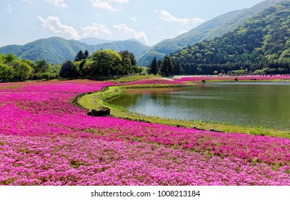 Scenery of pink Shibazakura ( Moss Phlox ) fields by the lakeside with mountains in background under blue sunny sky on a beautiful spring day during Fuji Shiba Sakura Festival in Yamanashi, Japan