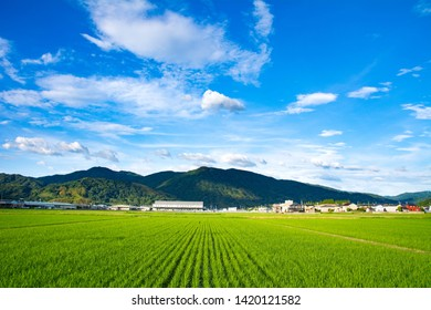 scenery of Rice fields in countryside of Saga prefecture, JAPAN. It is in August.