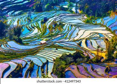 Landschaft von Reisterrassen in der Provinz Yunnan in China