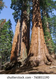 scenery at the Sequoia and Kings Canyon National Park with sequoia trees in California, USA