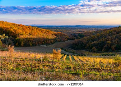 scenery of siena countryside in tuscany with colorful yellow trees in autumn at sunset