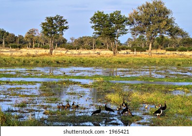 Scenery south luangwa national park zambia