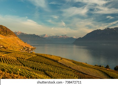 Scenery sunset view of vineyards of the Lavaux region over Leman lake (Geneva lake) with French Alps, blue sky and white clouds, Switzerland