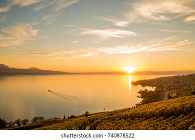 Scenery sunset view of vineyards of the Lavaux region over Leman lake (Geneva lake) with French Alps, blue sky, golden sun and white clouds, Switzerland