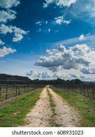 Scenery of Tempranillo grapevines perspective in Ribera del Duero, Spain. Country road running to the horizon between the Wine Yard. Beautiful blue sky on a sunny day the background. Vertical