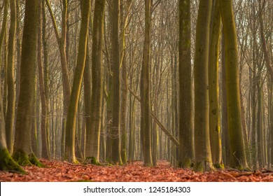 scenery of trees in a forrest