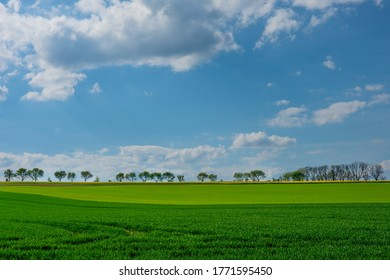 The scenery with a trees on hill in row with blue sky and green grass in the foreground. Miskovice, Kutna Hora, the Czech Republic.