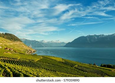 Scenery view of vineyards of the Lavaux region over Leman lake (Geneva lake), Switzerland
