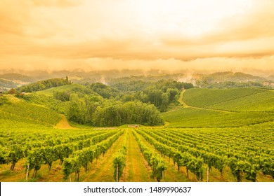 Scenery vineyard along the south Styrian vine route named Suedsteirische Weinstrasse in Austria at sunset, Europe.