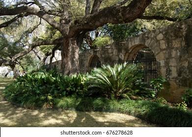 Scenes from the gardens surrounding the Alamo in San Antonio Texas in winter