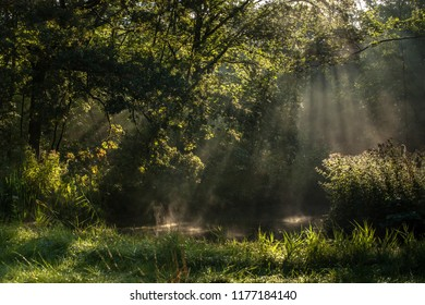 Scenes in 'Waterloopbos' near Marknesse in Holland with atmospheric natural landscape during an early autumn morning in September