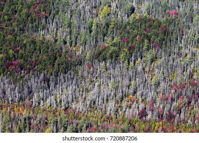 Scenic aerial view over the rich boreal forest in the province of Quebec, Canada, during early fall season under a sunny sky.