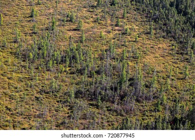 Scenic aerial view over the tundra at the edge of the Quebec boreal forest in Canada.