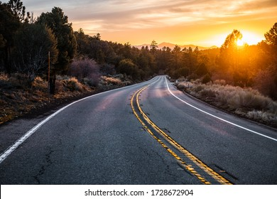 Scenic asphalt country road at sunset time in the forest