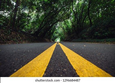 Scenic asphalt road with yellow marking lines at deep forest natural tunnel