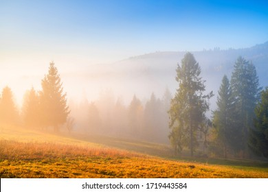 Scenic autumn landscape at sunrise. Trees on mountain hills in fog illuminated with warm morning sunlight. Beautiful fall nature. Picturesque woodland.