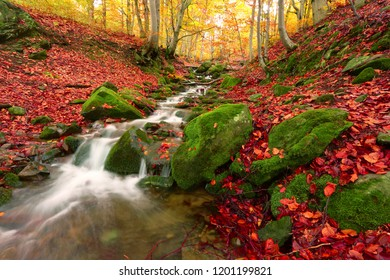 scenic autumn sunrise image in the golden forest, awesome view on river stream in forest in morning dawn sunlight , landscape nature colorful background, Carpathians, Europe mountains