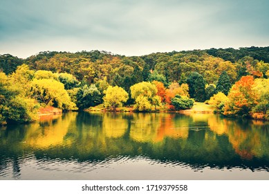 Scenic autumn view of Mount Lofty botanic garden by the pond, Adelaide Hills, South Australia