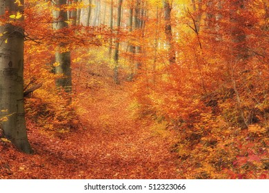 Scenic autumnal forest in Hungary