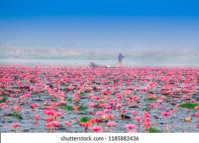 "Scenic beautiful view nature Landscape  ""Red Lotus Sea"" It is covered soft light in morning and mist blurred for background in the cold day winter season,Red lotus sea Kumpavapee, Udon Thani Thailand."