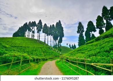 Scenic beauty of Gopaldhara tea garden at golpahar view point near Mirik.