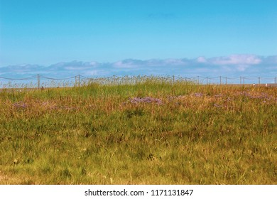 Scenic countryside landscape in Northern Germany at the Wadden Sea showing marsh rosemaries on a salt meadow and a vivid blue sky.
