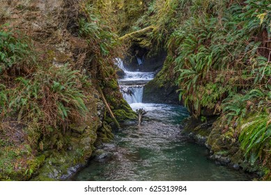 Scenic creek in the beautiful green forest. HOH RAIN FOREST, Olympic National Park, Washington state, USA