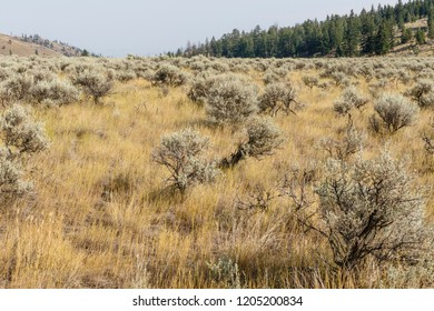 Scenic desert scenery near Kamloops, British Columbia, Canada