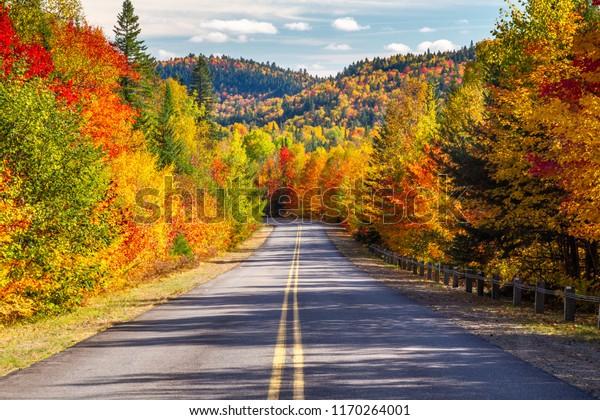 秋を通る風景ドライブ