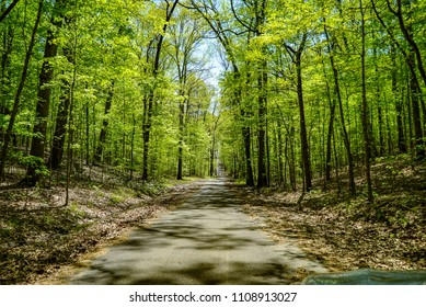 Scenic Drive Through the Forest in Springtime and Sunlight Shining Through the Trees