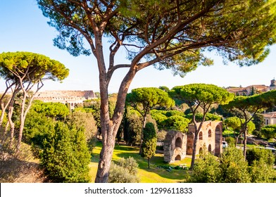 Scenic evergreen park with growing pines, velvet grass lawns and remains, ruins of the Aquaduct, aqueduct of Claudius at the Palatine hill with Colosseum on the background in Rome