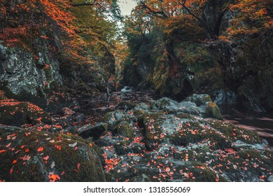 Scenic Fairy Glen Gorge waterfall with rocks covered in autumnal leaves in North Wales, UK
