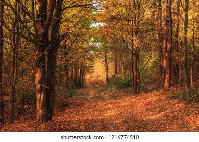 Scenic Fall Morning in the Bavarian Countryside with golden colors and colorful leaves in Franconia, Germany in Europe