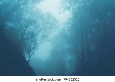 Scenic Foggy Forest of fresh green deciduous trees framed by leaves, with the sun casting its warm rays through the foliage