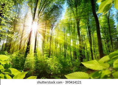 Scenic forest of fresh green deciduous trees framed by leaves, with the sun casting its warm rays through the foliage - Shutterstock ID 393414121