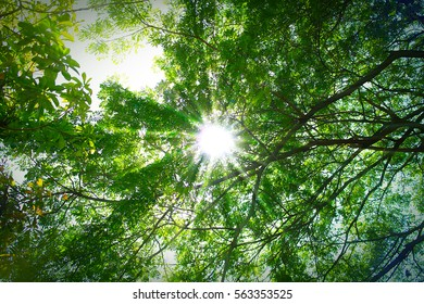 Scenic forest of fresh green deciduous trees framed by leaves with sun
