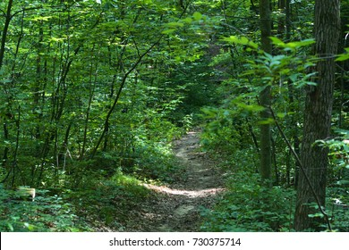 Scenic Forest Trail Holly Recreation Area