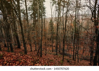 Scenic forest. Vintage forest background.