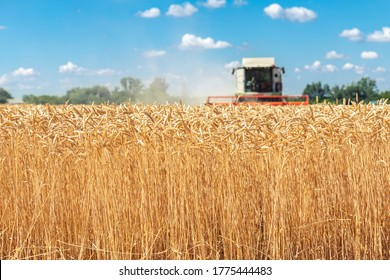 Scenic front view Big powerful industrial combine harvester machine reaping golden ripe wheat cereal field on bright summer or autumn day. Agricultural yellow field machinery landscape background