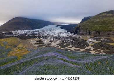 Scenic glacier tail and hill covered by blossoming lupin flowers